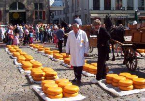 «چرخهای طلایی» معروف پنیر گودا در یک بازار پنیر