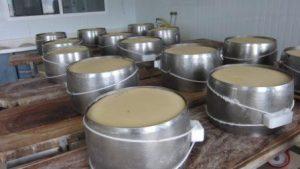قالب استیل ضد زنگ پنیر پارمزان